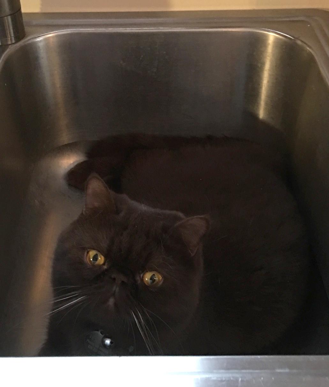 Hershhe_in Sink2