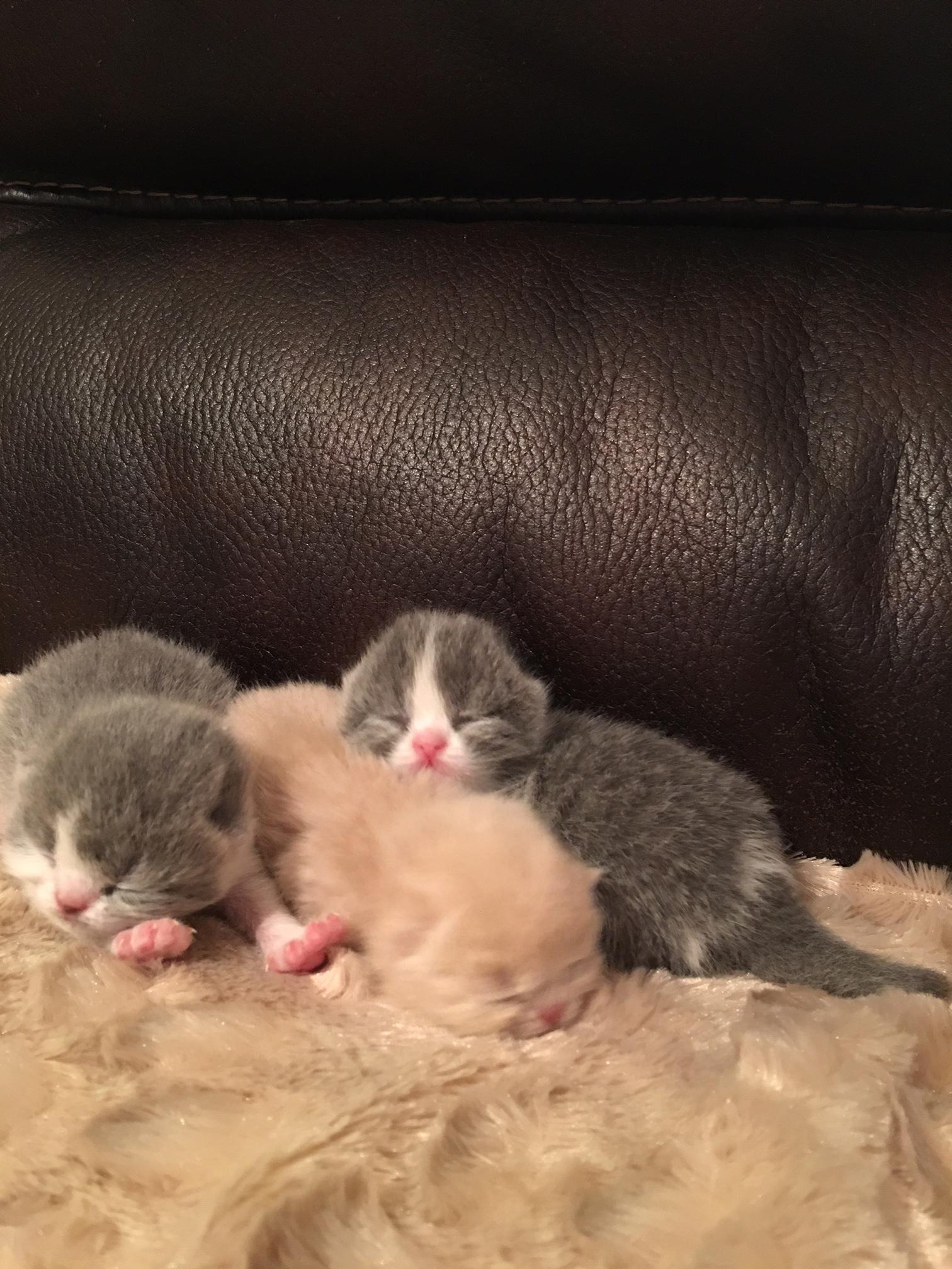 Kittens from june 30, 2016 Litter