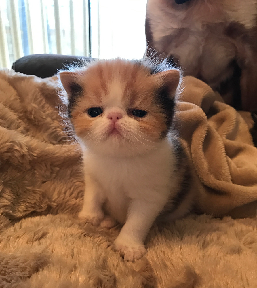MiMi Jan. 22, 2017 Litter - 2/16/17