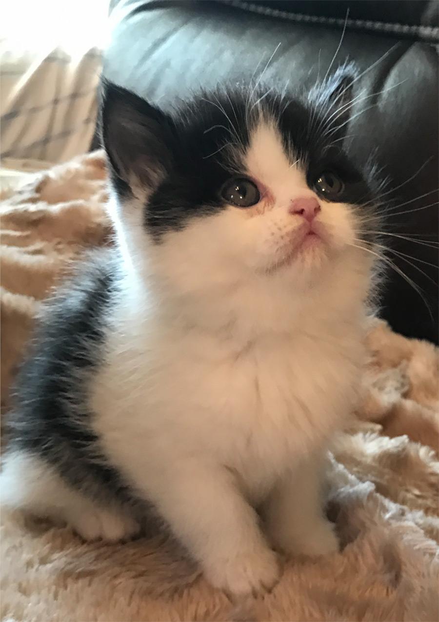Kitten 5  - Litter 1/22/17