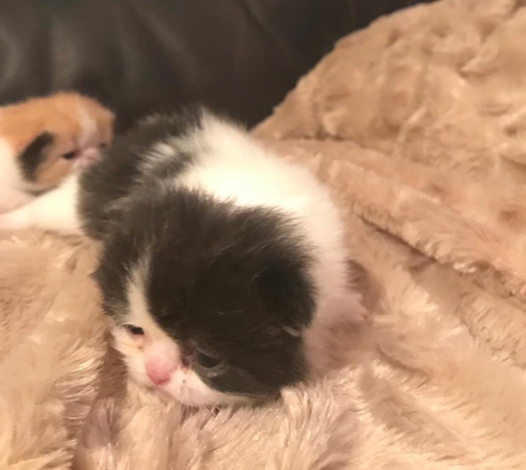 kitten5_3_2017_02