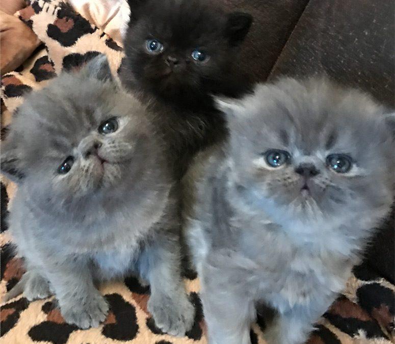 Kittens: February 25, 2017