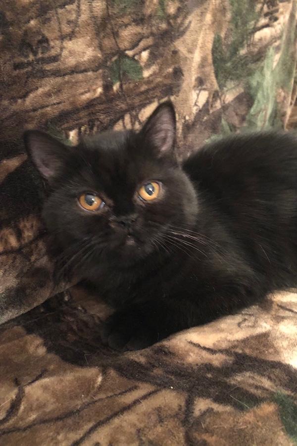 10/02/17 Kitten 1
