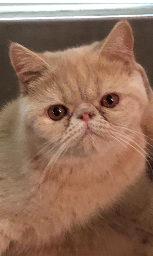 10/02/17 Kitten 2