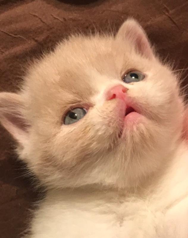 10_02_17 Kitten 3