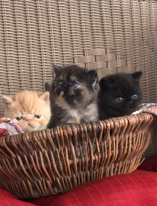 Kittens: September 14, 2017