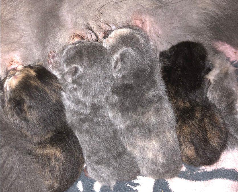 Kittens: June 30, 2018