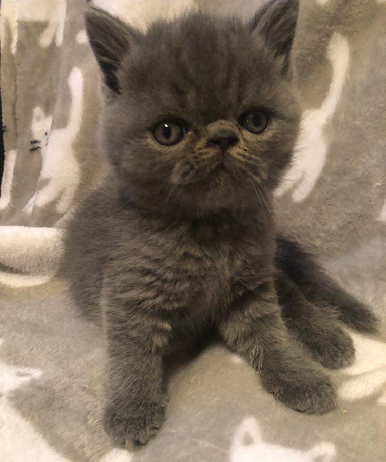 Kitten 1 6-30-18 Litter