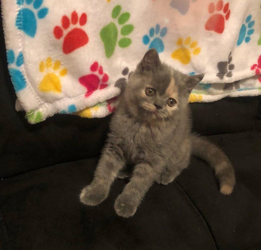 Kitten 2 6-30-18 Litter