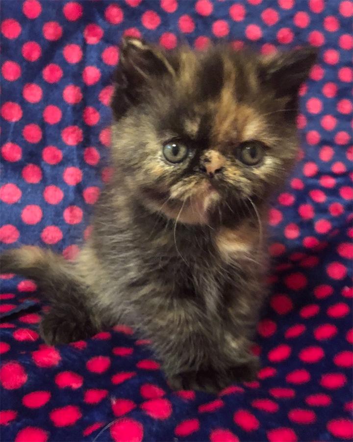 Zakee Kitten 3 6-30-18 Litter