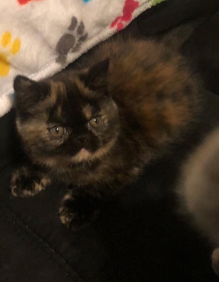 Kitten 4 6-30-18 Litter