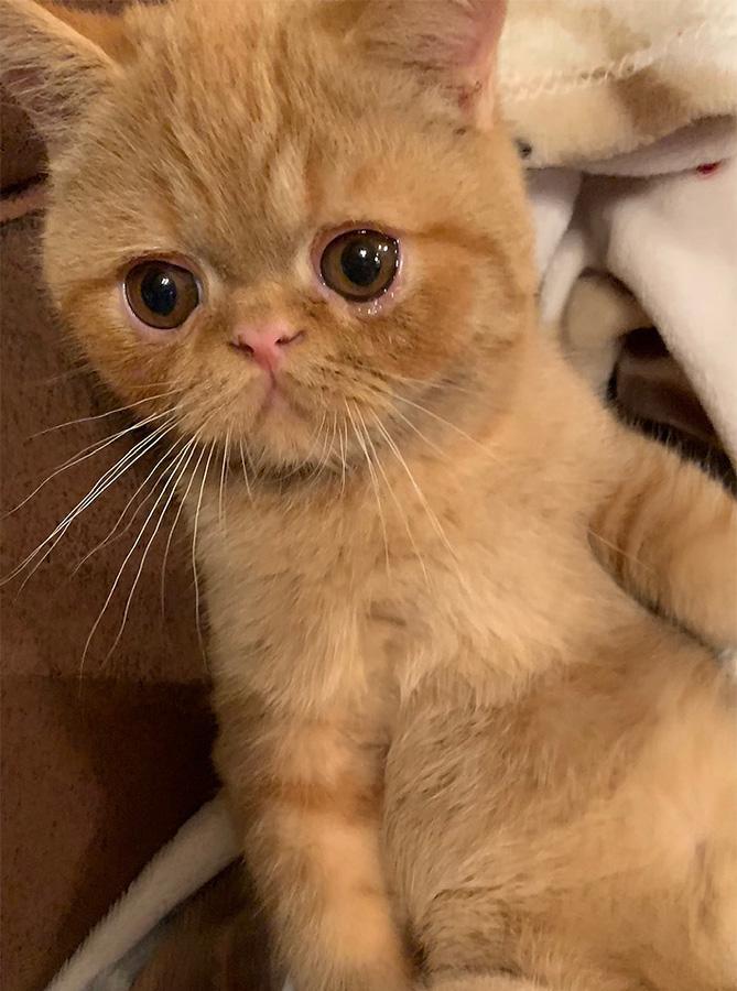 Kitten 2 6/3/2019
