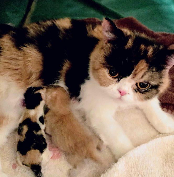Kittens: June 3, 2019