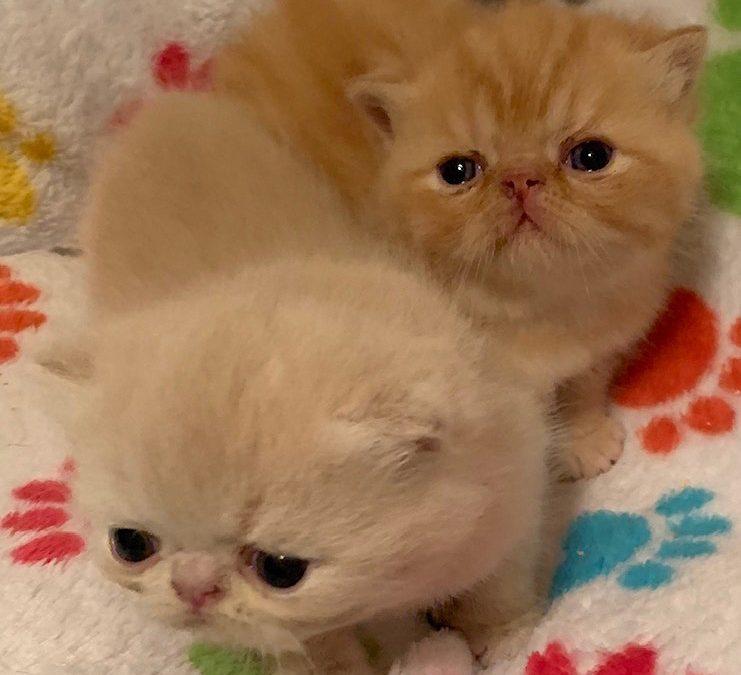 Kittens: July 1, 2019