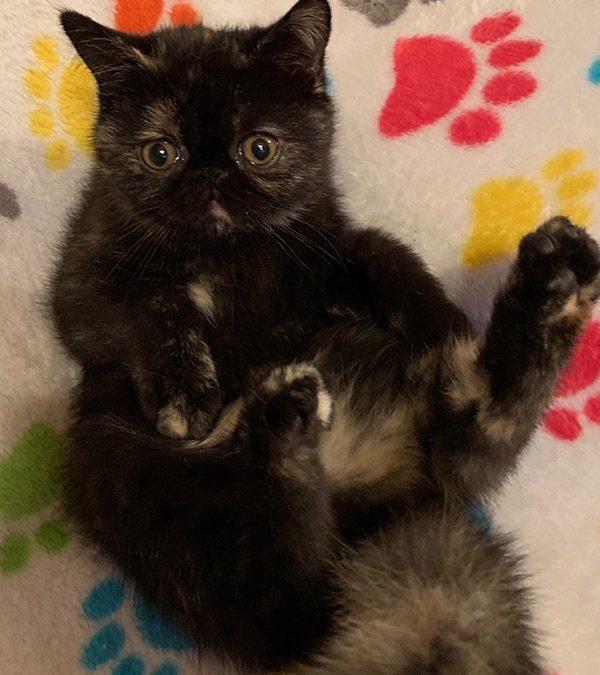 Kittens: July 18, 2019