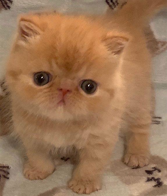 Kittens: October 2, 2019