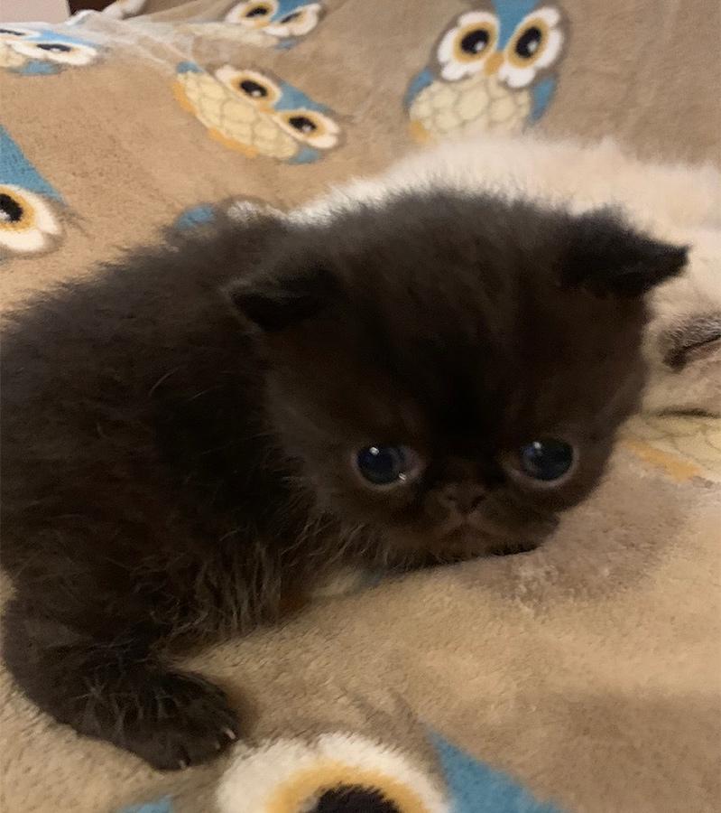 Kitten 2 3-10-20 Litter