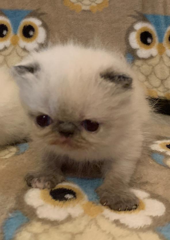 Kitten 3 3-10-20 Litter