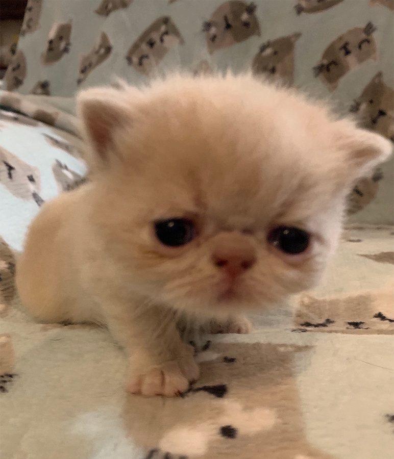 Kitten 4 3-26-20 Litter