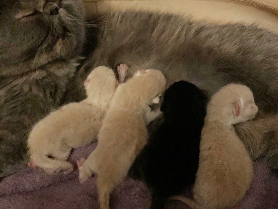 Kittens: March 26, 2020