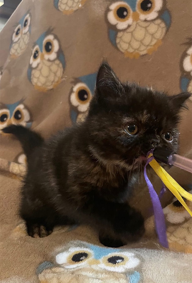 Jan 2021 Kitten 5 8_8_20 Litter