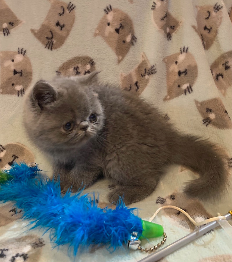 Kitten 1 Blue 8/8/20