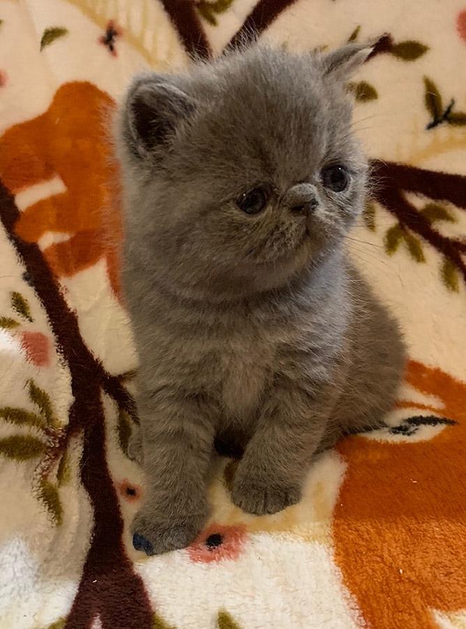 08_08_20_kitten_1