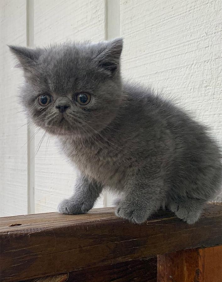 08_08_20_kitten_2