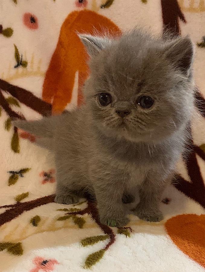 08_08_20_kitten_3