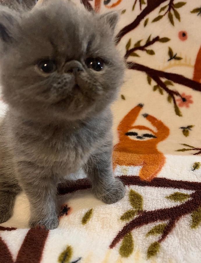 08_08_20_kitten_4