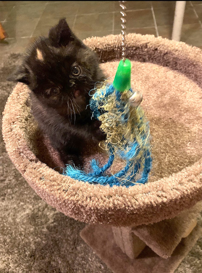 08_08_20_kitten_5