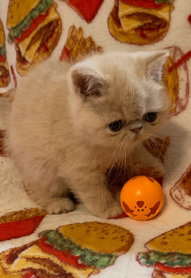 08_08_20_kitten_6