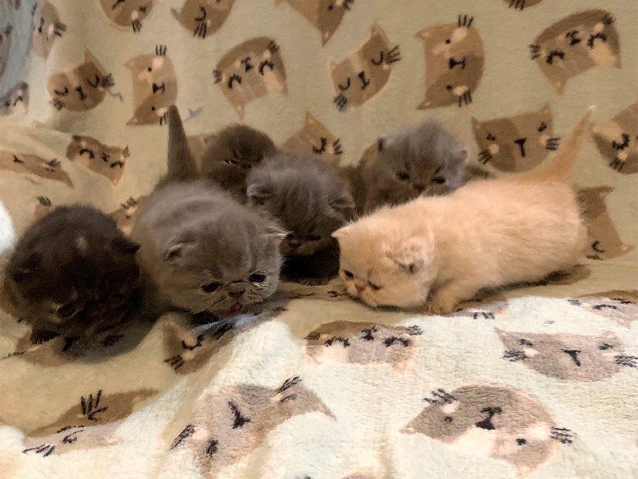 Kittens: August 8, 2020