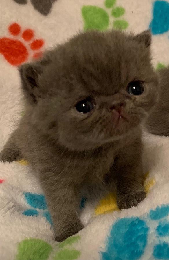 Kitten 2 5/16/19
