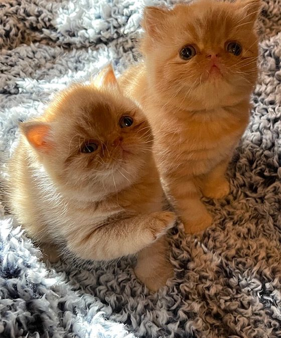 Kittens: December 20, 2020