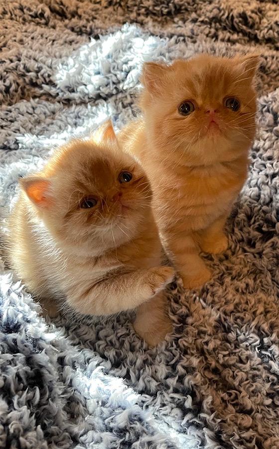 December 20, 2020 Kittens