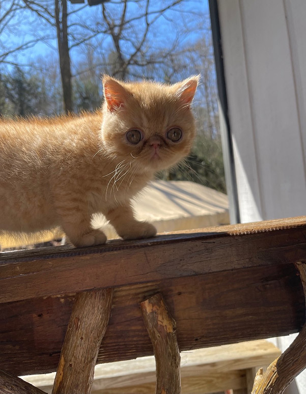 December 20, 2020 Kitten