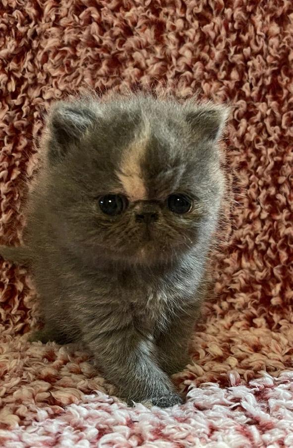 January 8, 2021 Kitten