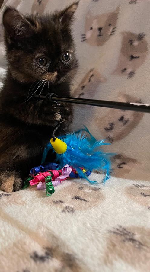 March 3, 2021 Kitten 5