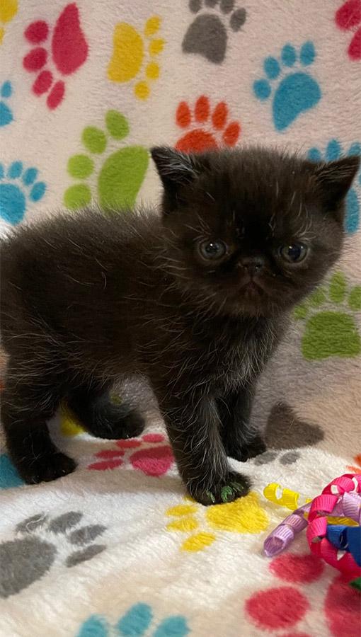 March 3, 2021 Kitten