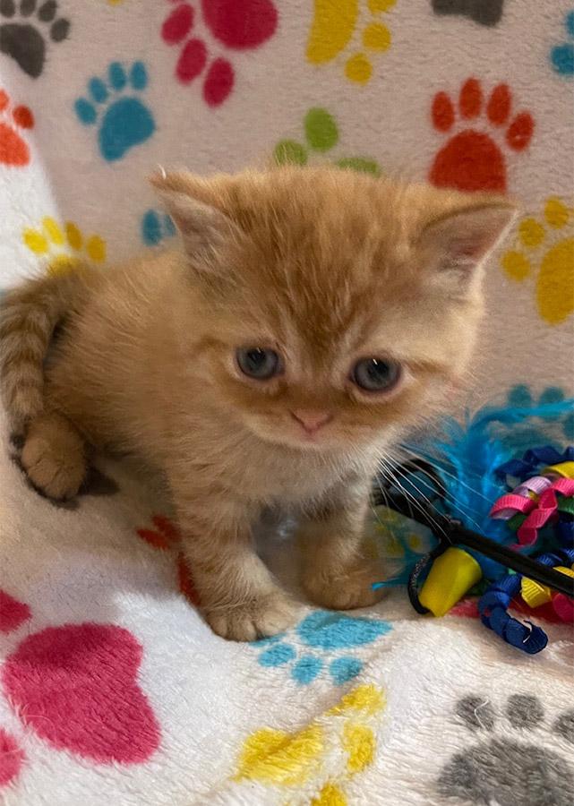 March 6, 2021 Kitten